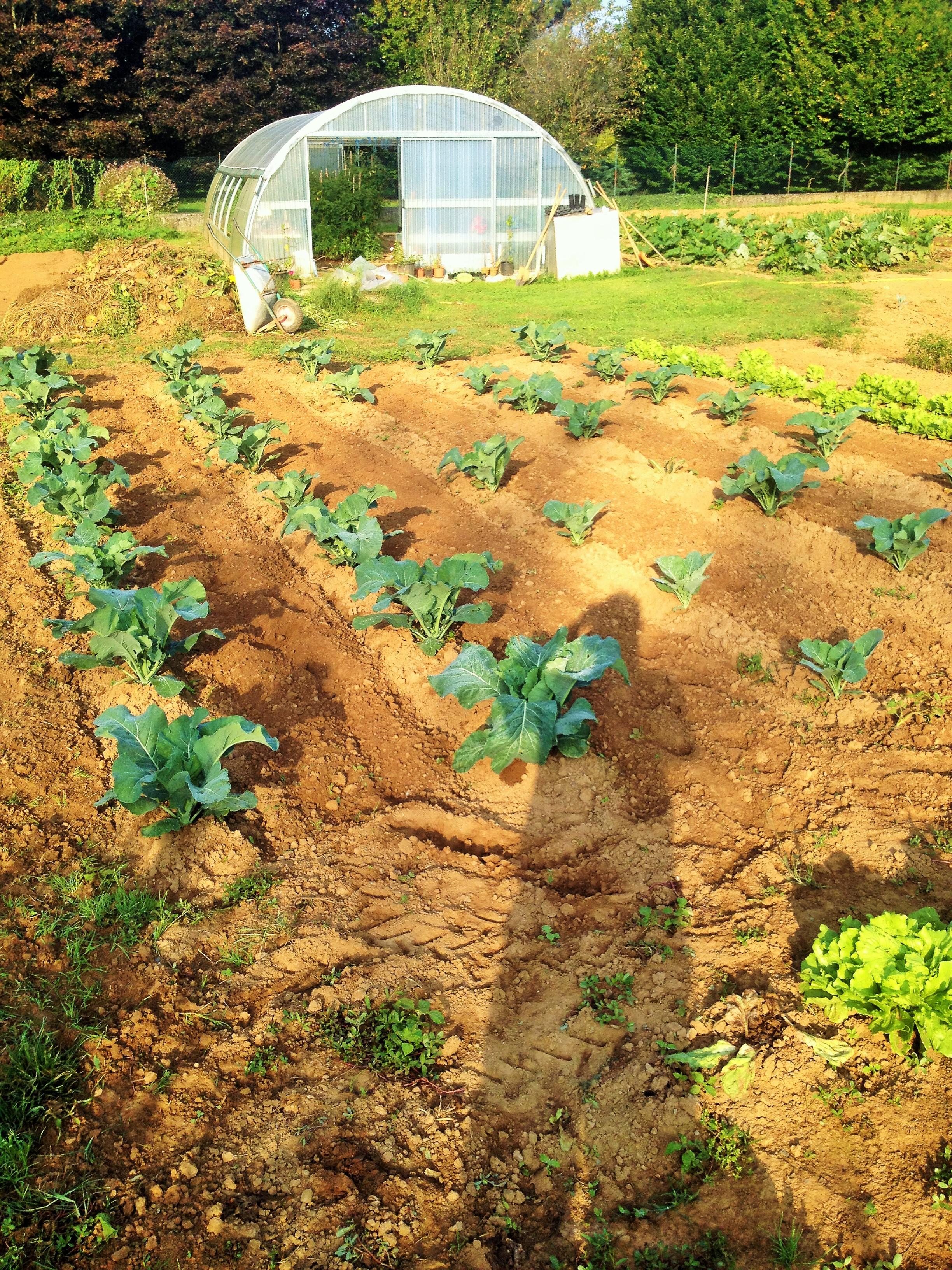 Il giardino del sole agricoltura sociale tra lavoro e - Il sole nel giardino ...